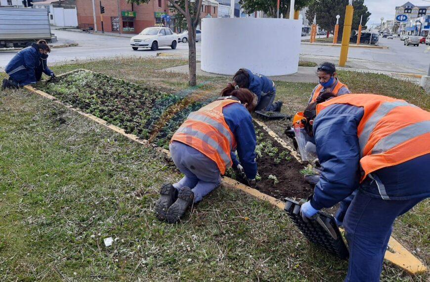 Colocan plantines en la Avenida San Martín