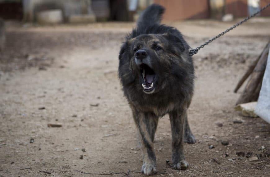 Se confirmó la multa al dueño del perro que mordió a un niño en Tolhuin